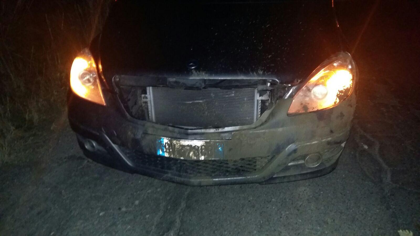 Incidente stradale causato da un cinghiale